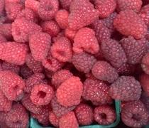 Marquam Hill Berries